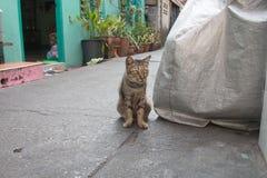 Gato sin hogar en la calle Imagenes de archivo