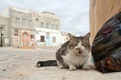 Gato sin hogar en Túnez imagen de archivo