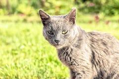 Gato sin hogar gris Imagenes de archivo