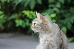 gato sin hogar infectado con herpesvirus felino - rinotraqueítis o chlamydiosis viral felina - psittaci del Chlamydia con el conj fotografía de archivo libre de regalías
