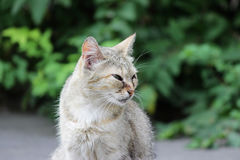 gato sin hogar infectado con herpesvirus felino - rinotraqueítis o chlamydiosis viral felina - psittaci del Chlamydia con el conj imagen de archivo