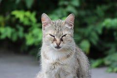 gato sin hogar infectado con herpesvirus felino - rinotraqueítis o chlamydiosis viral felina - psittaci del Chlamydia con el conj fotos de archivo
