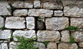 Gato sin hogar lindo que mira de una pared Imagen de archivo libre de regalías