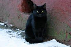 Gato sin hogar negro Foto de archivo