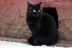Gato sin hogar negro Fotografía de archivo