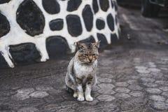 Gato sin hogar pobre del combatiente imágenes de archivo libres de regalías