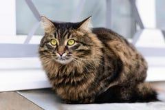 Gato sin hogar que se sienta en el tejado del sótano Foto de archivo