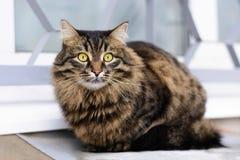 Gato sin hogar que se sienta en el tejado del sótano Fotografía de archivo libre de regalías