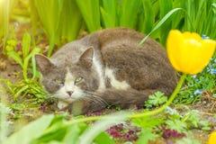 Gato sin hogar que se sienta en la hierba fotografía de archivo