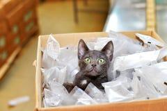 Gato sin hogar que se sienta en una caja de cartón incluyendo packag plástico Foto de archivo