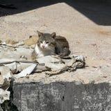Gato sin hogar que se sienta en una pila de papeles Imagenes de archivo