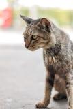 Gato sin hogar que sienta y que mira algo Imágenes de archivo libres de regalías