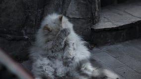 Gato sin hogar viejo en la calle metrajes