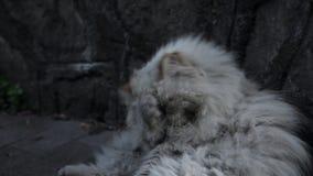 Gato sin hogar viejo en la calle almacen de video
