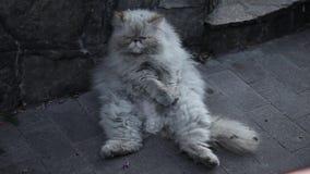 Gato sin hogar viejo en la calle almacen de metraje de vídeo