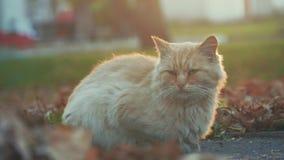 Gato sin hogar viejo en la calle Gato del retrato del primer Cara linda del gato almacen de video