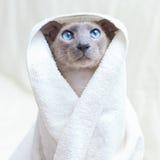 Gato sin pelo en toalla Imagenes de archivo