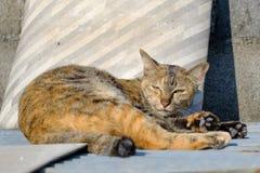 Gato sleeppy Fotografia de Stock Royalty Free