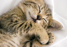 Gato soñoliento fotos de archivo