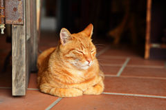 Gato soñoliento foto de archivo