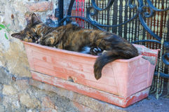 Gato soñoliento. fotografía de archivo