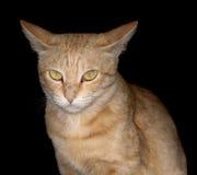 Gato soñoliento Fotografía de archivo