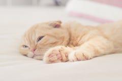 Gato soñoliento agujereado fotos de archivo