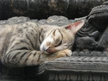Gato soñoliento con el ratón de piedra fotos de archivo libres de regalías