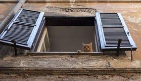 Gato soñoliento del jengibre que miente en una ventana con los obturadores de la casa vieja en Roma foto de archivo