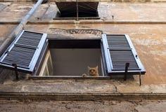 Gato soñoliento del jengibre que miente en una ventana con los obturadores de la casa vieja en Roma imagen de archivo