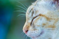Gato soñoliento del primer imagen de archivo libre de regalías