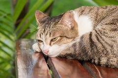 Gato soñoliento en casa imagen de archivo libre de regalías