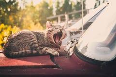 Gato soñoliento en un coche viejo imagenes de archivo