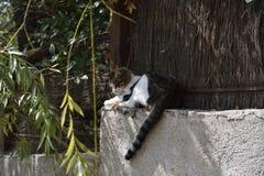 Gato soñoliento en una pared en el fragor del sol imágenes de archivo libres de regalías