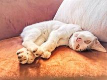 Gato soñoliento, gato lindo, amante del ‹del catâ€, sofá del ‹del †del ‹del on†el dormir del ‹del cat†fotografía de archivo