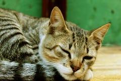 Gato soñoliento que descansa, gatito precioso Imagenes de archivo