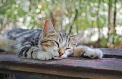 Gato soñoliento que miente en banco Imágenes de archivo libres de regalías