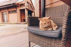 Gato soñoliento que miente en silla fotografía de archivo