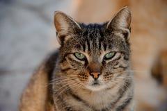 Gato soñoliento sin hogar con los ojos semicerrados al aire libre imágenes de archivo libres de regalías