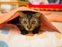 gato sob a cobertura Fotos de Stock Royalty Free