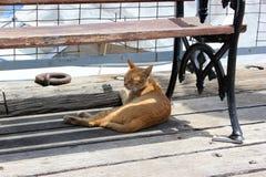 Gato sob o banco no dia de verão Gato do gengibre do sono na sombra do banco imagens de stock