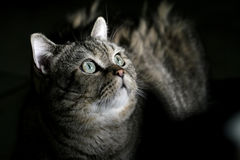 Gato sob o crepúsculo? Fotos de Stock