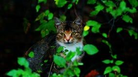 Gato sob um arbusto Fotografia de Stock