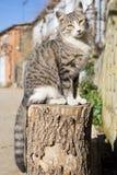 Gato sobre el registro, vista delantera Foto de archivo