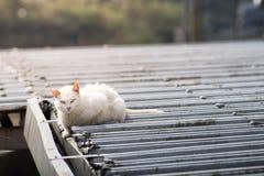 Gato sobre el tejado Imagen de archivo libre de regalías
