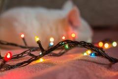 gato sobre la guirnalda Foto de archivo
