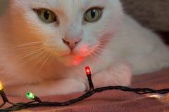 gato sobre la guirnalda Fotografía de archivo libre de regalías
