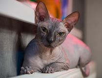 Gato sobre o calefator Fotos de Stock Royalty Free