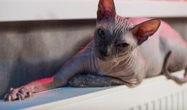 Gato sobre o calefator Foto de Stock Royalty Free