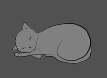 Gato sobre o cinza Foto de Stock Royalty Free